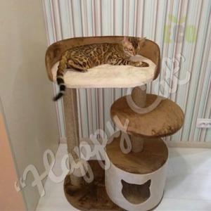 Сухой корм для кошек Pro Plan (ПроПлан)